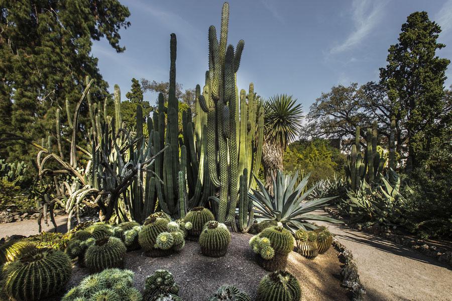 Col·lecció de cactus i plantes crasses a l'exterior. Foto: Miguel Lorenzo.