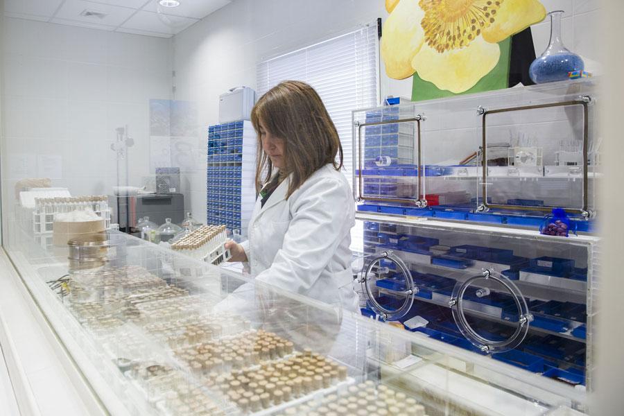 Elena Estrelles, conservadora del Banc de Germoplasma, os es preserven llavors i espores per a estudis científics i de conservació de la biodiversitat vegetal. Foto: Miguel Lorenzo.