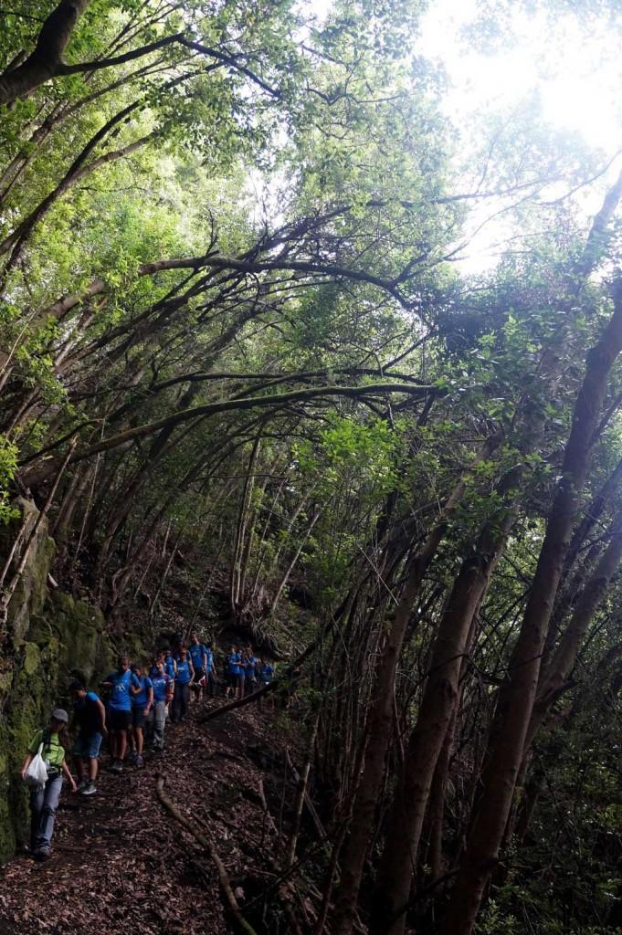 Excursió per un dels boscos tropicals de les Illes Canàries.