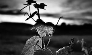 foto-premi-Hortensia